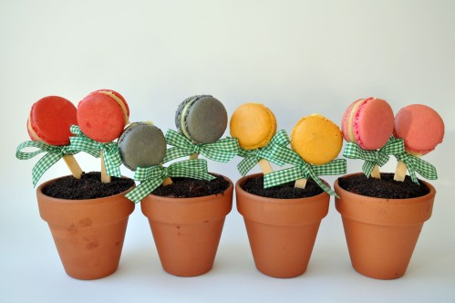 Flower Pot Macarons